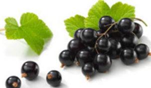 Is Black Currant Keto Ketoask Keto Ask Keto Diet Guide Keto Friendly Food Search