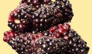 Are Marionberries Keto Ketoask Keto Ask Keto Diet Guide Keto Food Search