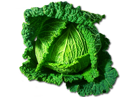 Savoy Cabbage Keto Friendly Ketoask Ketogenic Keto Ask Keto Diet Guide Keto Food Search